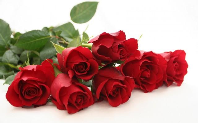 Roses-